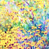 Print MOUNTAIN WILDFLOWERS 4 M by Todd Scott Anderson