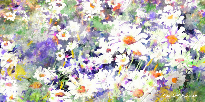 Print MOUNTAIN WILDFLOWERS 30 M by Todd Scott Anderson