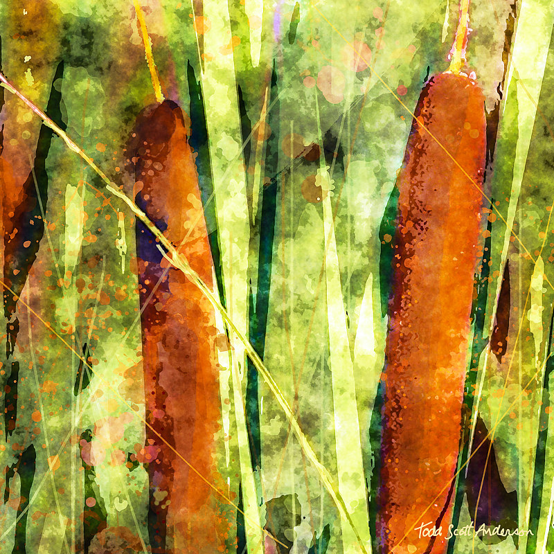 Print CATTAILS 4 M by Todd Scott Anderson