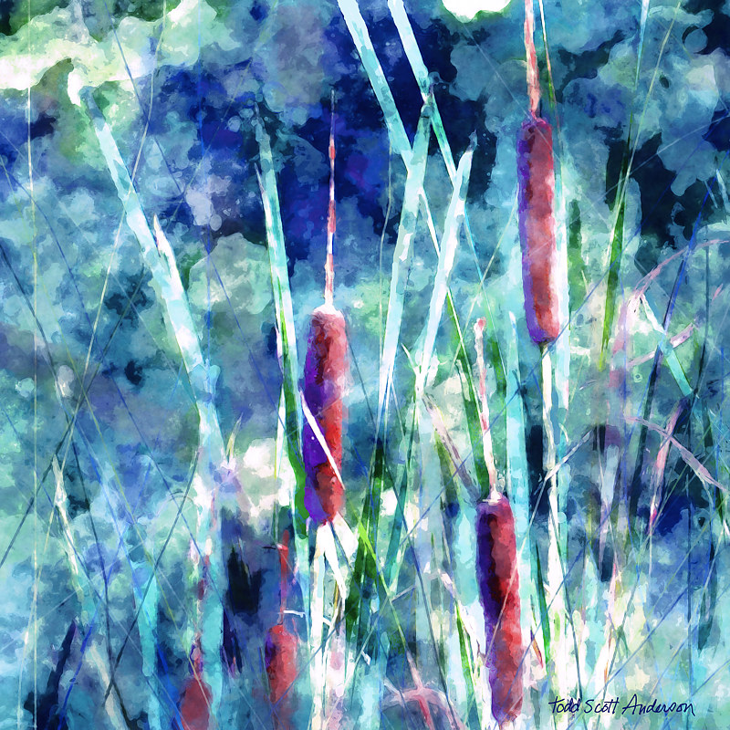 Print CATTAILS 5 M by Todd Scott Anderson