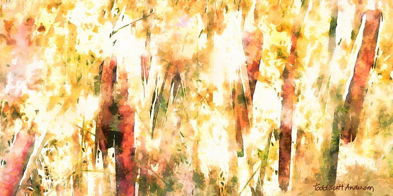 Print CATTAILS 12 M by Todd Scott Anderson