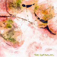 Print ASPEN LEAVES 4 M by Todd Scott Anderson