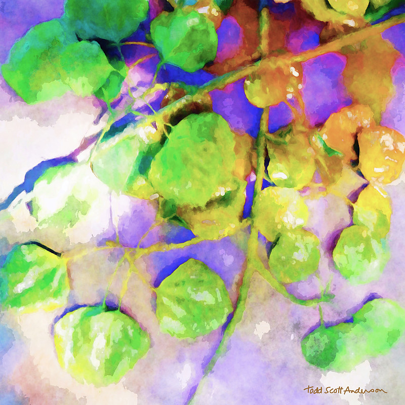 Print ASPEN LEAVES 18 D by Todd Scott Anderson