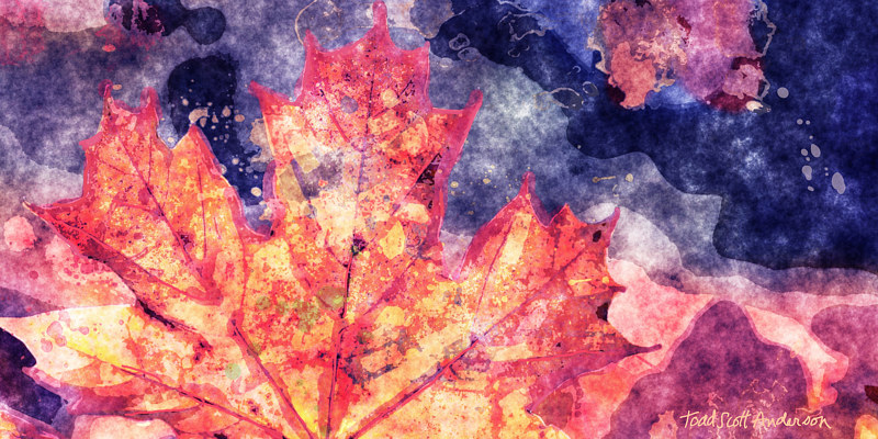 Print MAPLE LEAVES 9 M by Todd Scott Anderson