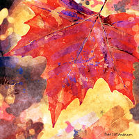 Print MAPLE LEAVES 10 M by Todd Scott Anderson