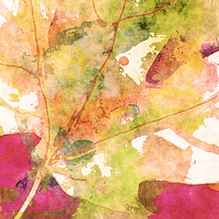 Print MAPLE LEAVES 11 M by Todd Scott Anderson
