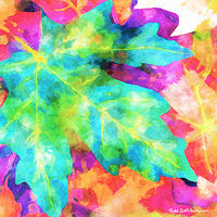 Print MAPLE LEAVES 12 M by Todd Scott Anderson