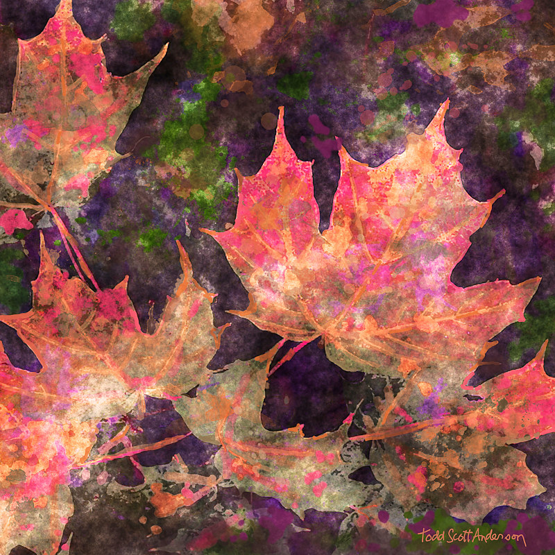 Print MAPLE LEAVES 14 M by Todd Scott Anderson