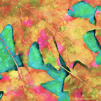 Print MAPLE LEAVES 30A M by Todd Scott Anderson