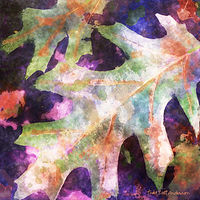 Print OAK LEAVES 1 M by Todd Scott Anderson