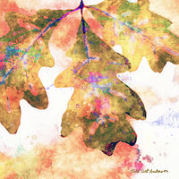 Print OAK LEAVES 15 M by Todd Scott Anderson