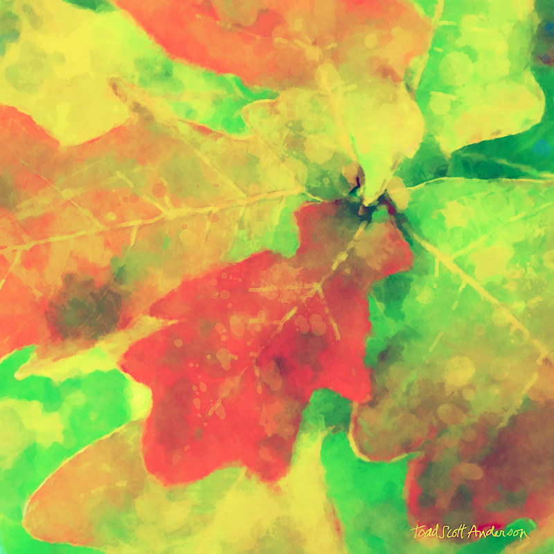 Print OAK LEAVES 17 M by Todd Scott Anderson