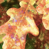 Print OAK LEAVES 22 M by Todd Scott Anderson