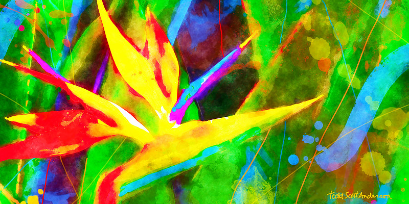 Print BIRD OF PARADISE 16 T by Todd Scott Anderson