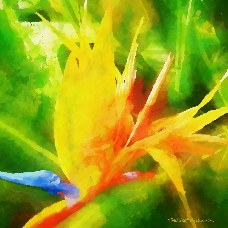 Print BIRD OF PARADISE 2 T by Todd Scott Anderson