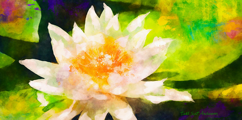 Print WATER LILY 15 T by Todd Scott Anderson