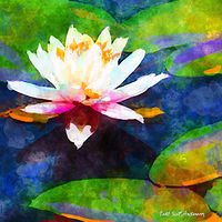 Print WATER LILY 12 T by Todd Scott Anderson