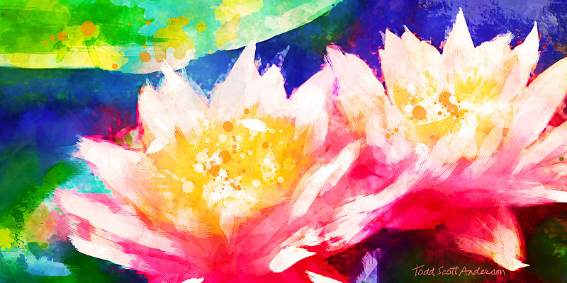 Print WATER LILY 9 T by Todd Scott Anderson