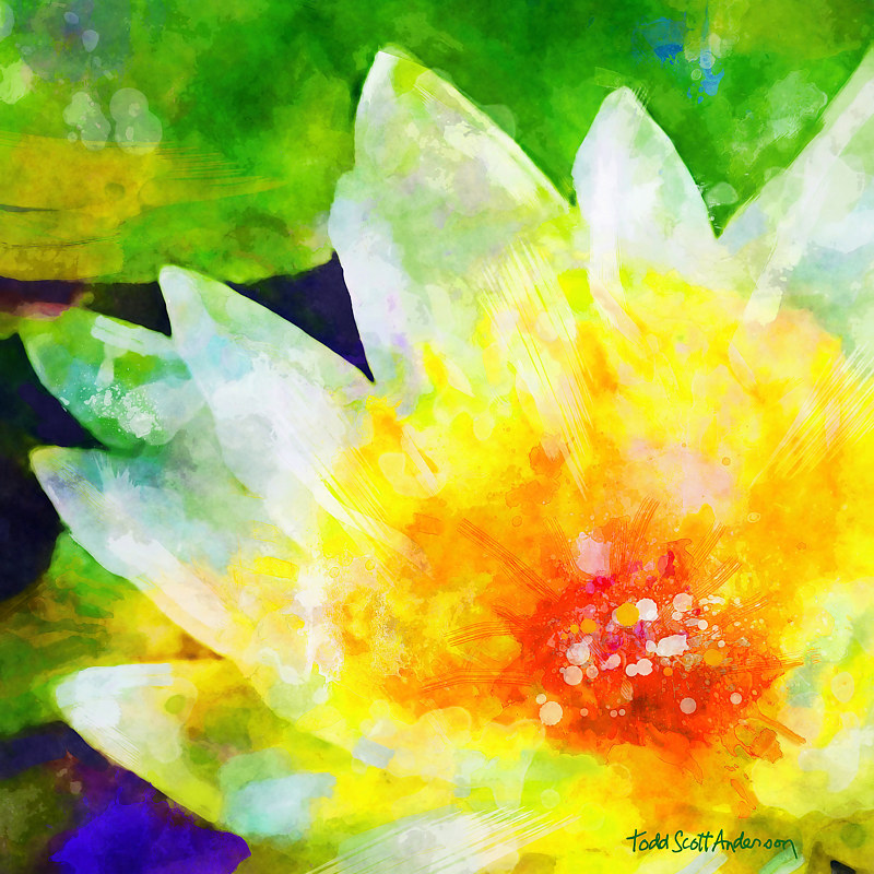 Print WATER LILY 6 T by Todd Scott Anderson