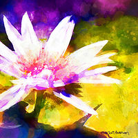 Print WATER LILY 4 T by Todd Scott Anderson