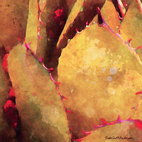 Print SONORA AGAVE 19 D by Todd Scott Anderson