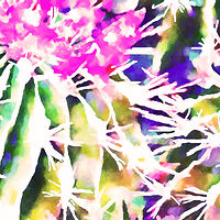 Print MOJAVE CACTUS 15 D by Todd Scott Anderson