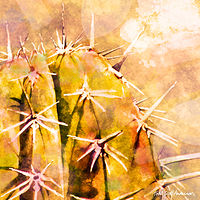 Print SONORA SAGUARO 6 D by Todd Scott Anderson