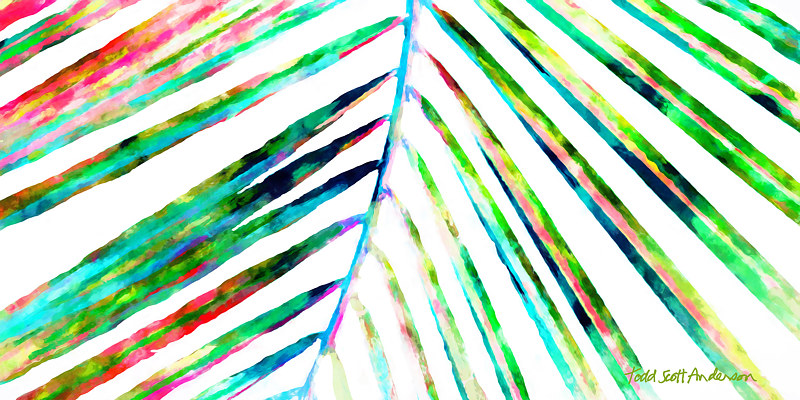 Print PALM ON WHITE 14 WP by Todd Scott Anderson
