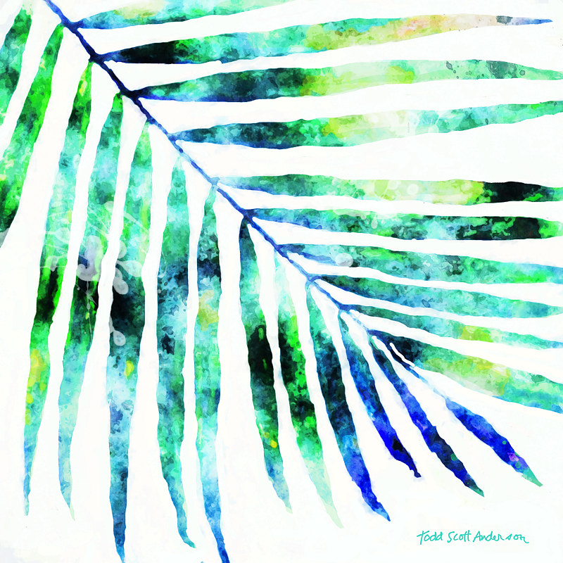 Print PALM ON WHITE 10 WP by Todd Scott Anderson
