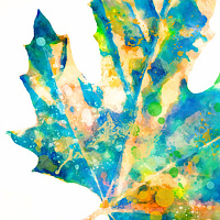 Print MAPLE ON WHITE 11 WM by Todd Scott Anderson