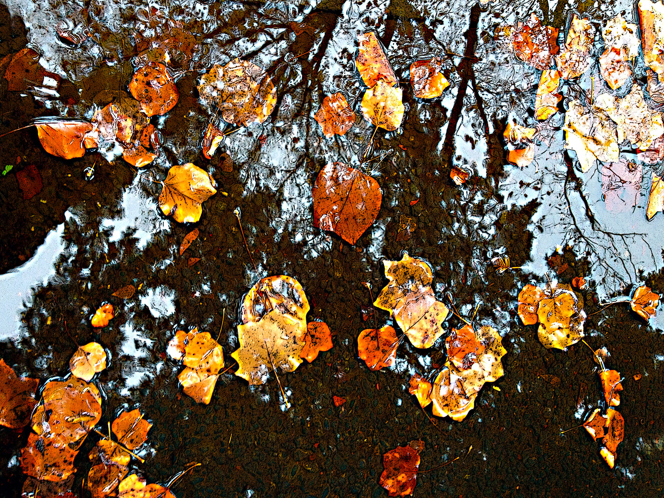 IMG_1565 - Fall leaf Reflections by Richard  Ashby