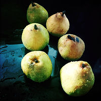 Pears in Waiting by Susan Raines