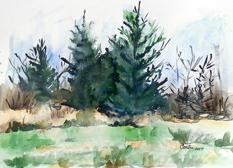 %22Spruce Trees%22 by Kathleen Contri