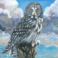Print C-152 GREAT GRAY OWL by Cody Blomberg