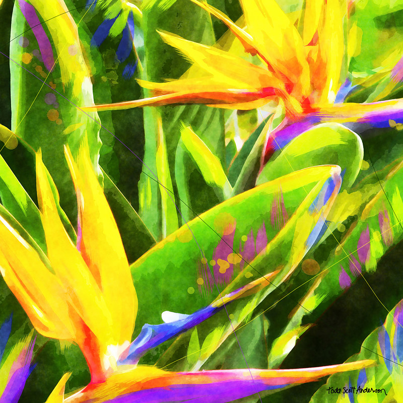 Print BIRD OF PARADISE 7 T by Todd Scott Anderson