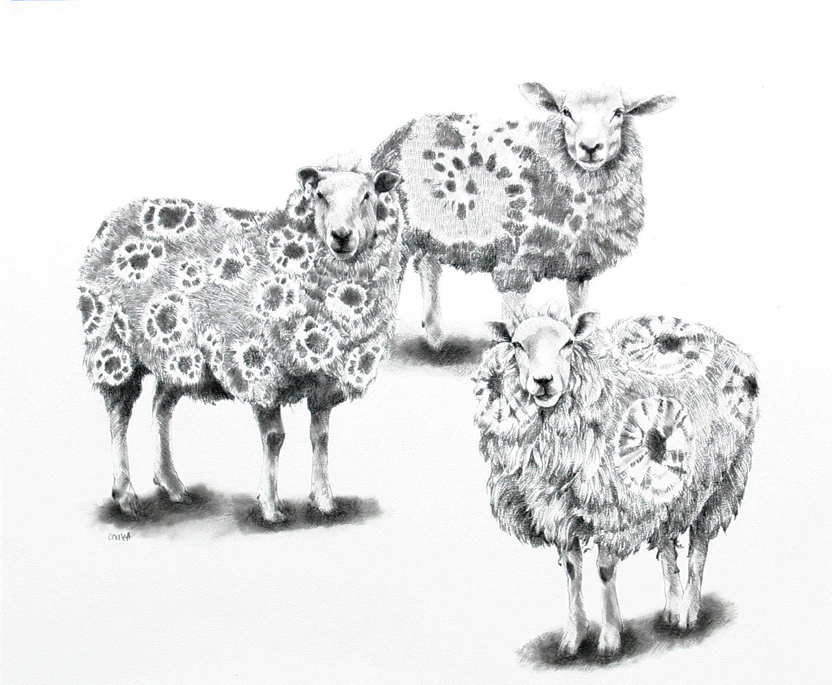 Drawing Hippy Sheep by Ellen Cornett