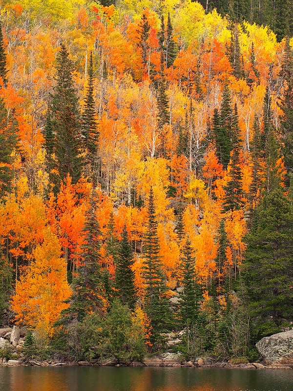 Fall in the Rockies by Ann Williams
