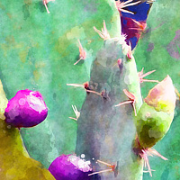 Print SONORA CACTUS 11 D by Todd Scott Anderson