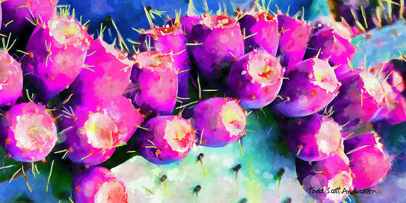 Print SONORA CACTUS 12 D by Todd Scott Anderson