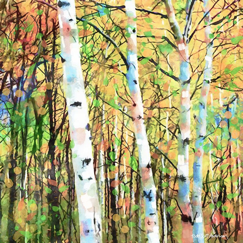 Print ASPENS 24 M by Todd Scott Anderson