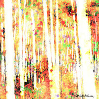 Print ASPENS 5 M by Todd Scott Anderson