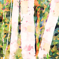 Print ASPENS 20 M by Todd Scott Anderson