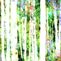 Print ASPENS 12 M by Todd Scott Anderson