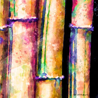 Print BAMBOO 10 T by Todd Scott Anderson