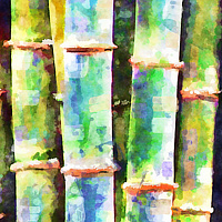 Print BAMBOO 9 T by Todd Scott Anderson