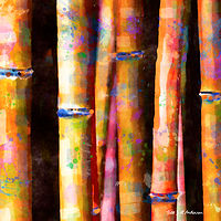 Print BAMBOO 8 T by Todd Scott Anderson