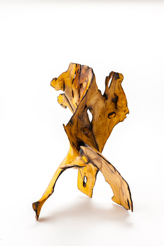 """Lemon Burl Tree"" by Derek bencomo Bencomo"
