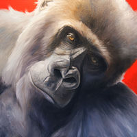 Gorrilla Adore_48x48 by Adam Thomas
