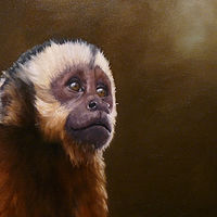Capuchin_20x16  by Adam Thomas