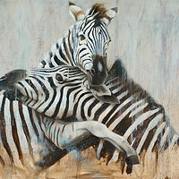 Zebra Love_36x48 by Adam Thomas